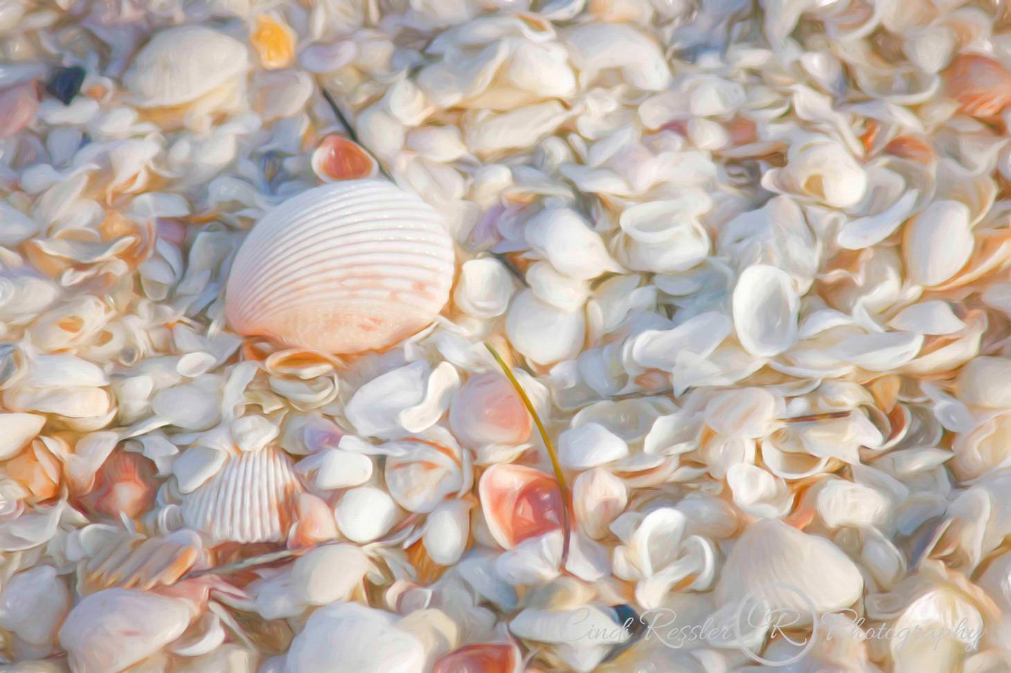 Painterly Seashells