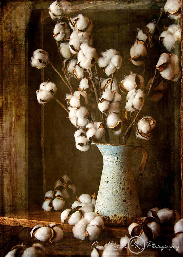 Country Cotton