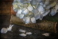 hydrangea-6788.jpg