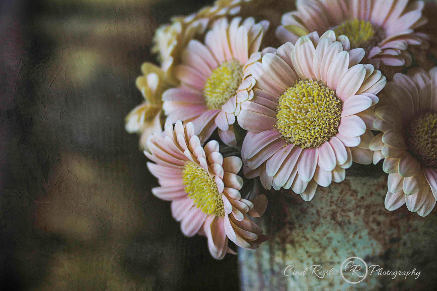 Mini Pink Gerbera Daisy