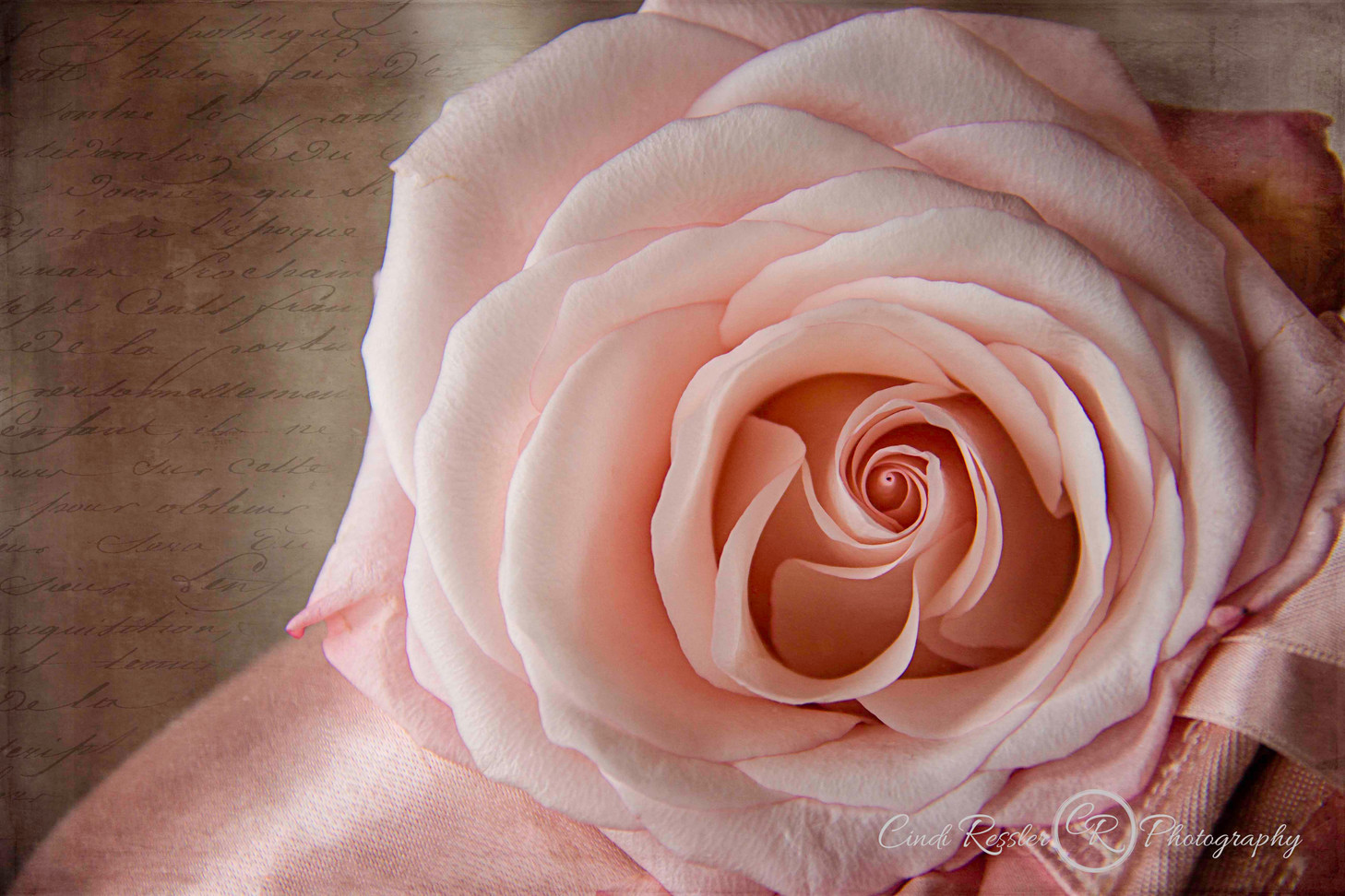 Pink Rose With Ballet Slipper