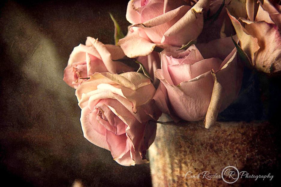 Mini Pink Roses