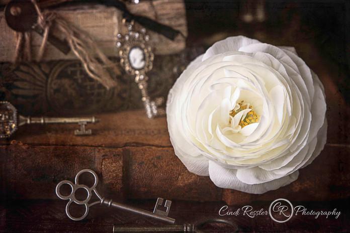 ranunculus-white-key.jpg