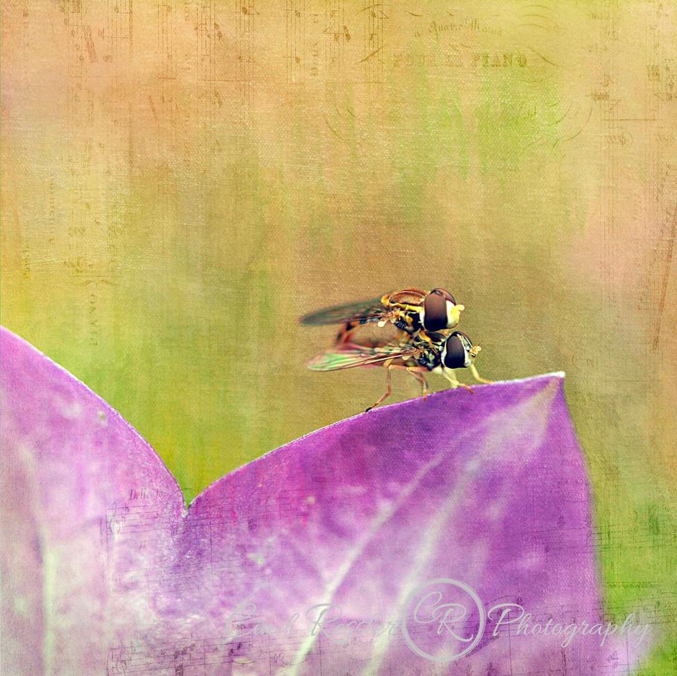 Dance Of The Hoverflies