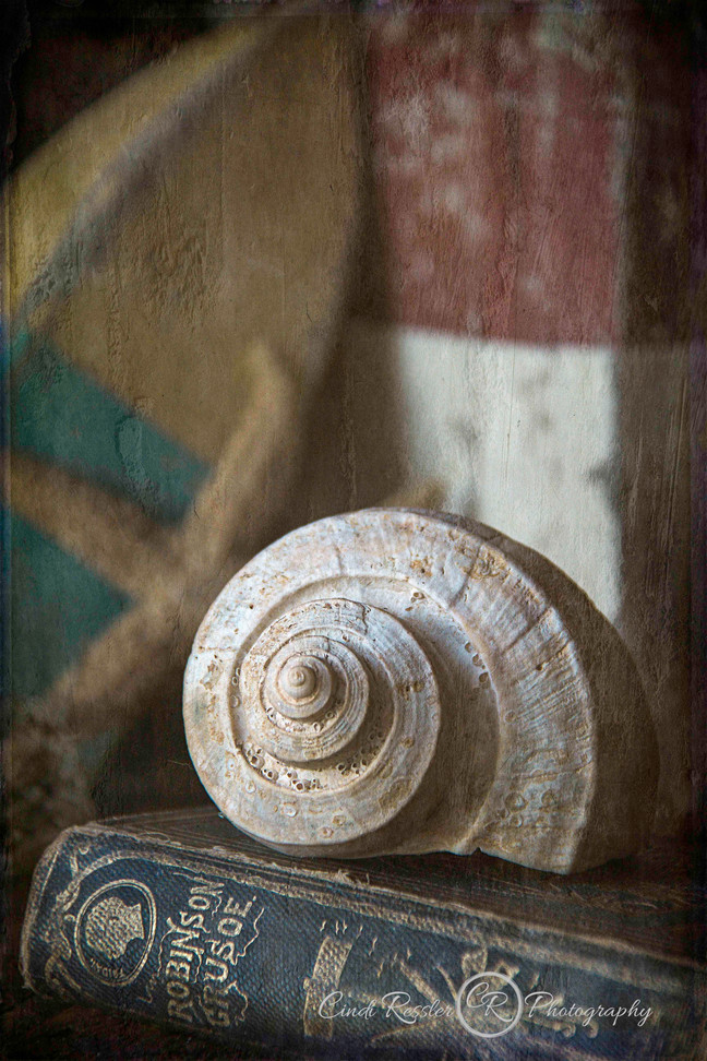 Seashell Collector