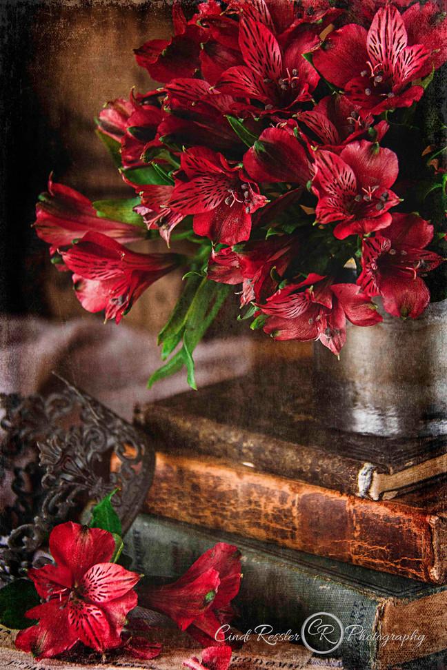 Ruby Red Alstromeria