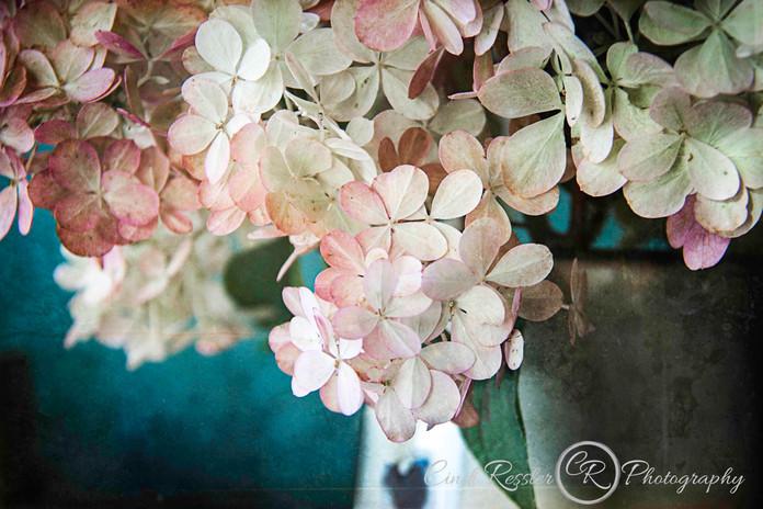 hydrangea-pink.jpg