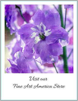 Fine Art America Store