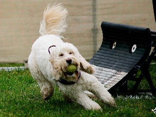 Flyball Opportunity