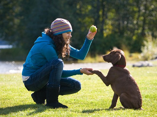 Fascinated by positive reinforcement dog training?