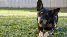 Heat Stress does kill dogs.