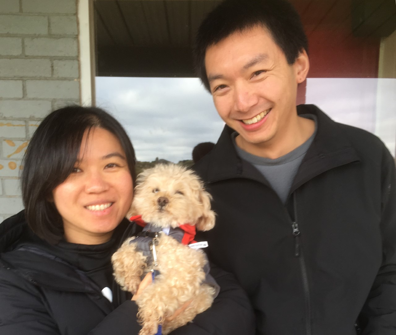 Elva Timmy and Billy toy poodle 122