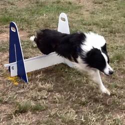 Ollie over jump