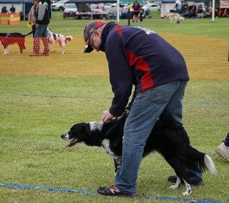 Flyball Competition Sunday 11th June at Keilor