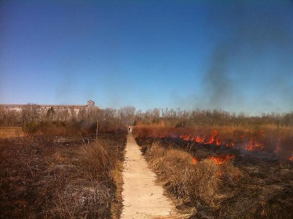 Controlled Burn In Eunice, Louisiana