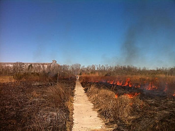 Controlled Burn In Eunice, Louisiana