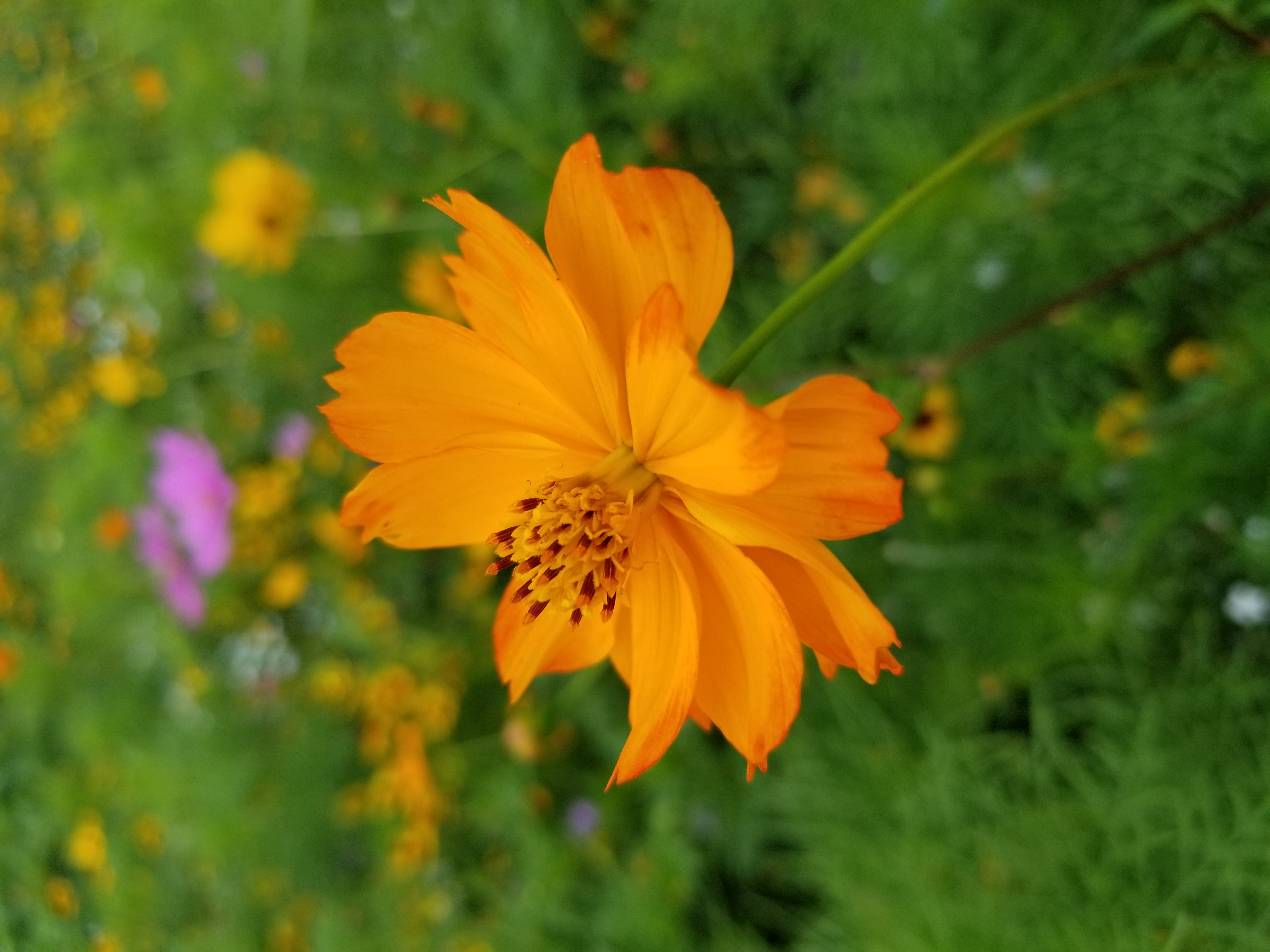 Orange yellow flower