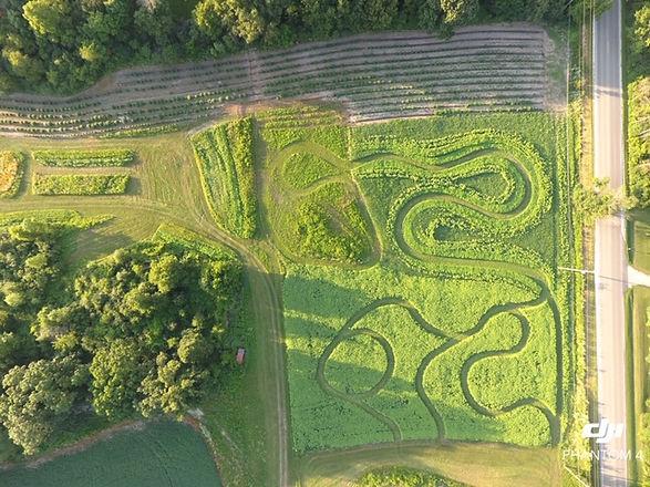 Sunflower.Maze (2).jpg