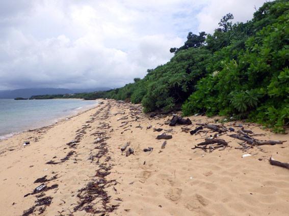 海岸漂着ゴミプログラム/海岸のゴミ2