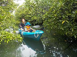 西表島を旅行で訪れるならカヤック&トレッキングでマングローブ流域を探索できる【くまのみ自然学校】へ。漕ぐだけで自然を満喫できる!カヤックの不思議な魅力