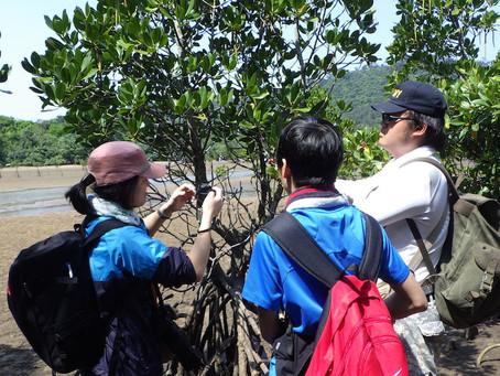私立高校生物部OB会実習②マングローブ植物の謎に迫る