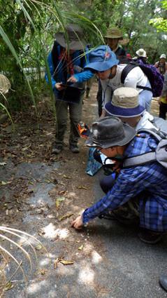 教育旅行 亜熱帯林実習3