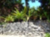 サンゴ垣とフチビ_mini.jpg