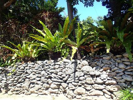 教育旅行 西表文化実習 フチビとサンゴの石垣
