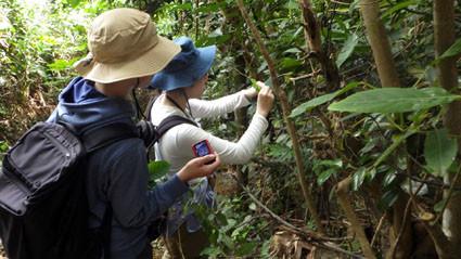 教育旅行 茨城高校亜熱帯林実習3