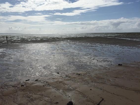180616ウミショウブ見に干潮の海へ