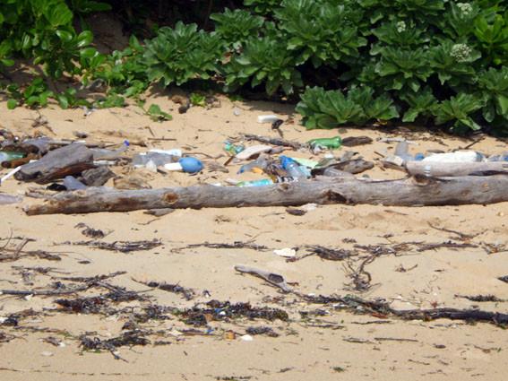 海岸漂着ゴミプログラム/海岸のゴミ1