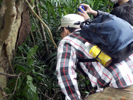 私立高校生物部OB会実習①亜熱帯の山トレッキングと