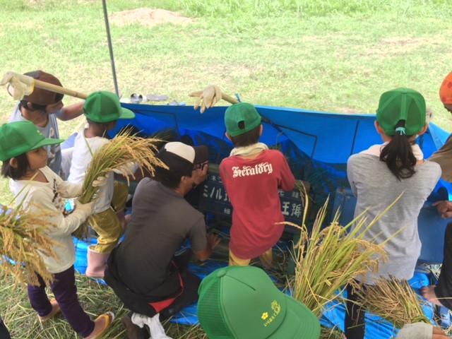 西表小中学校稲刈り2018-2