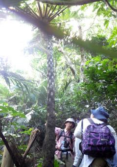 茨城高等学校西表島実習2 亜熱帯林と西表文化