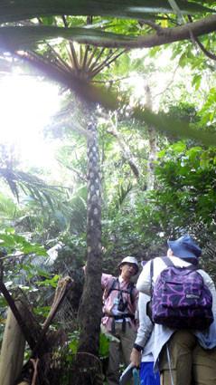 教育旅行 茨城高校亜熱帯林実習1