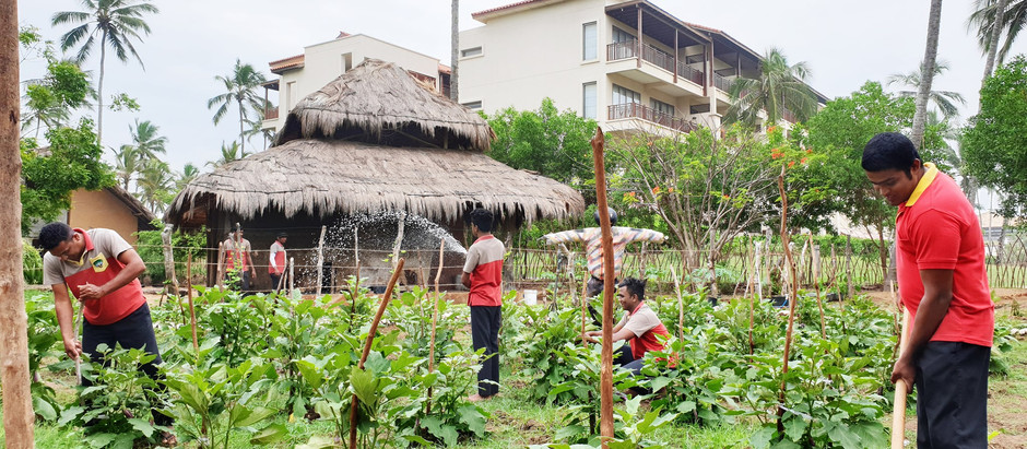 Chefs convert Artisan Village to an Agricultural Masterpiece
