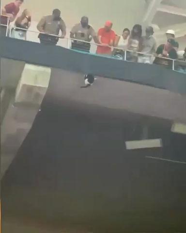 Impactante! El rescate de un gato que estremeció a un estadio en EE. UU.