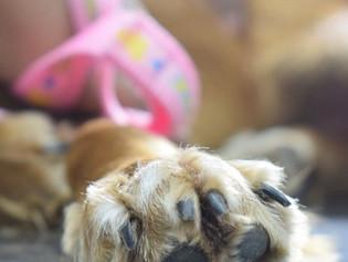 Perro herido llegó solo a la veterinaria pidiendo ayuda