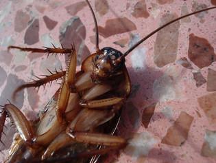 Restaurante fue atacado con mil cucarachas en China