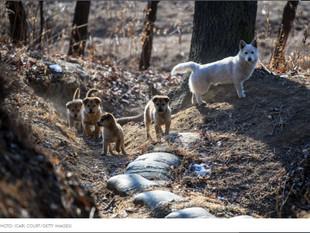 Gobierno de Corea del Norte prohibe tener perros como mascotas: Esto es lo que pasará con los canino