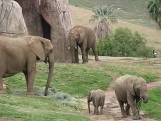 Entra en el recinto de elefantes con su hija de 2 años y escapan por poco