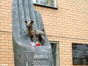 Se cumplen 63 años de la gesta espacial de Laika, el primer ser vivo en orbitar la Tierra