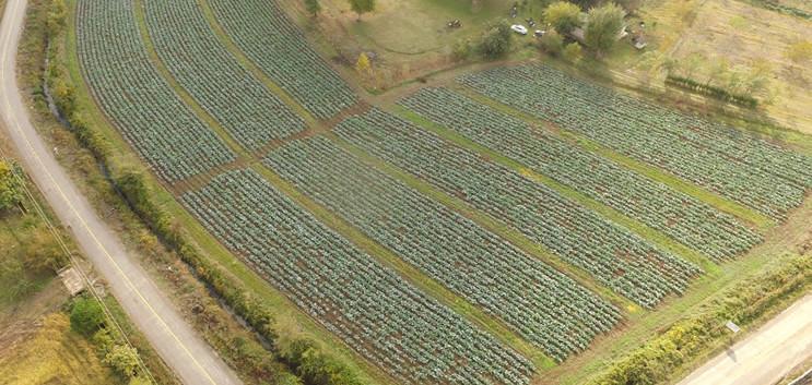 Şener Çiftliği