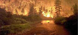 Bir gün ormanda yangın çıkar