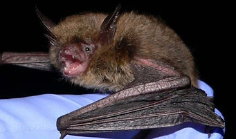 Bats-Top-Photo-Crop.jpg