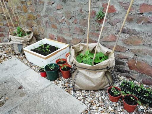 Starting our veggie garden