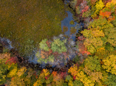 Above the Fall Color