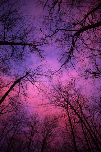 Northwoods Sunset II