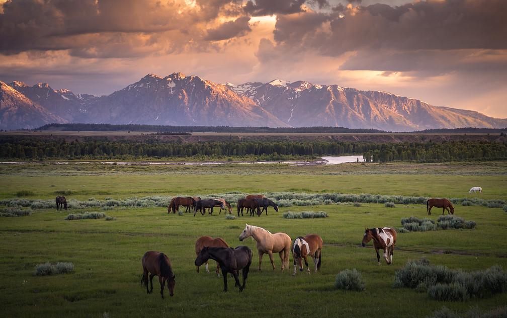 Wyoming Vibes