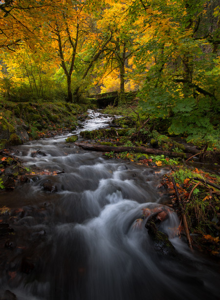 Fall in the Gorge